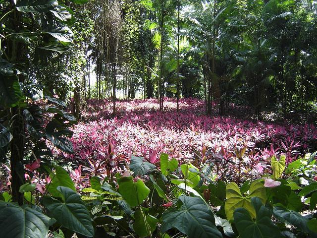 Yaracuy Flora y Fauna  Información